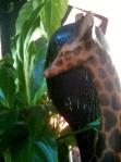 Growing life with Giraffe